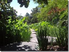 Brisbane's Roma St Parklands have lillies