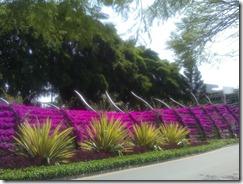 Purple Brisbane South Bank