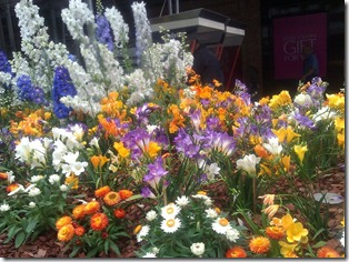 Queen Street bloom Brisbane