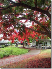 Red petals near Kurrilpa Bridge Brisbane