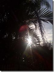 Sunny palm Brisbane