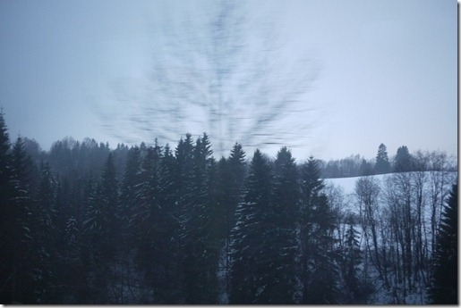 Pine trees in Oslo, Norway. Photo from Flytoget train.