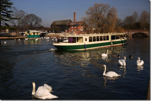 Swans and boats - Stratford-Upon-Avon, England, UK