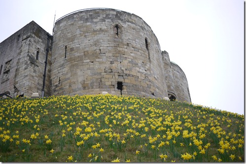 The Castle Tower with daffodill bloom in York, Yorkshire, England, UK