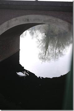 Swan on the avon, Stratford-Upon-Avon, England, UK