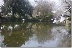 Spring park birds, Dublin, Ireland