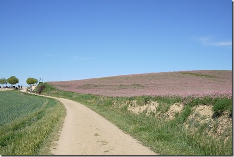 Purple meseta fields, el Camino de Santiago, Camino Frances, Spain