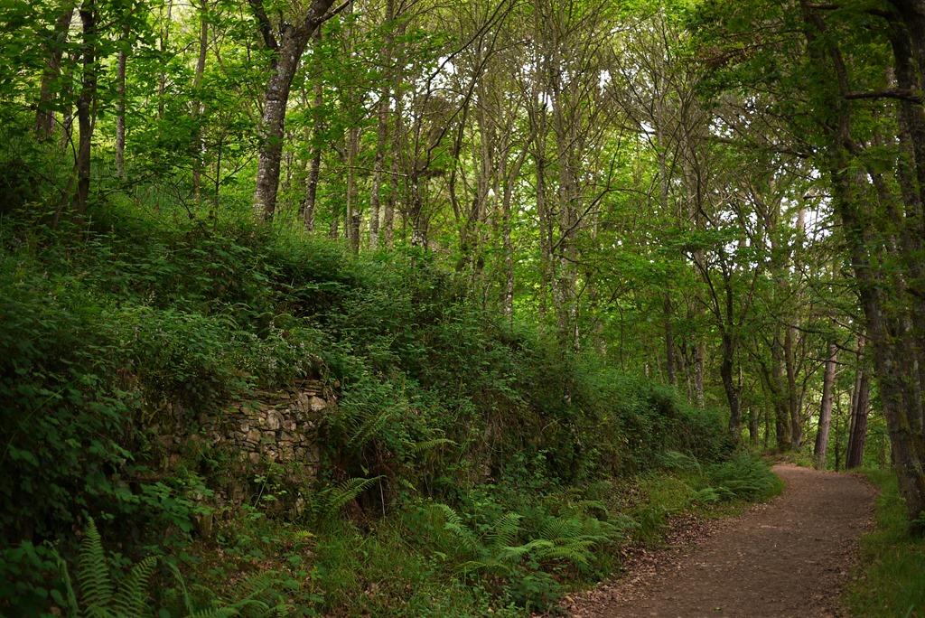 Walking The End Of My Camino To Santiago De Compostela