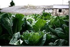 Vegetable patch - Walking Camino de Santiago from Sarria, Spain