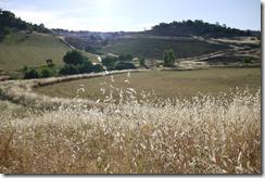 Walking rural Ronda, Spain