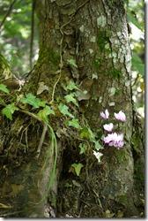 Flowers in Plitvice Lakes National Park Croatia
