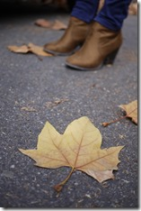 Autumn leaf in Melbourne
